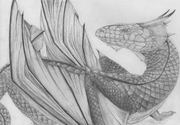 "Another oldie, ""shingleback dragon"". Remind me to have a go re-drawing this idea :)"