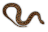 Name:  Brown-Water-Snake_bg.png