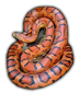 Name:  corn-snake22_bg.png Views: 1094 Size:  12.4 KB