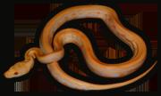 Name:  Snake-Tree4_bg.png Views: 1167 Size:  27.7 KB