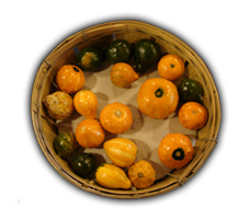 Name:  Basket-Gourds_bg.png