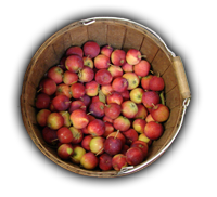 Name:  Apple-Barrel_bg.png
