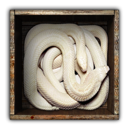 Name:  Snakes-in-Box3_4Eyes_id_bg.png