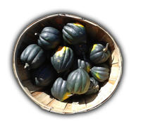 Name:  Basket of Squash5345_bg.png