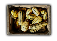 Name:  Box of Squash2345_bg.png