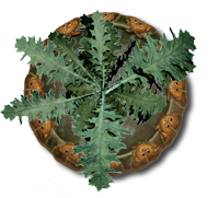 Name:  Plant1211_bg.png Views: 236 Size:  67.1 KB