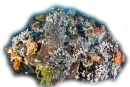 Click image for larger version.  Name:Coral1.png Views:19 Size:606.3 KB ID:115935