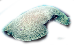 Click image for larger version.  Name:coral7.png Views:24 Size:376.4 KB ID:115945