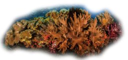Click image for larger version.  Name:Coral6.png Views:19 Size:338.7 KB ID:115947