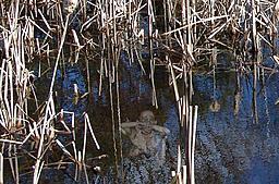Click image for larger version.  Name:swamp draug.jpg Views:10 Size:254.5 KB ID:116110